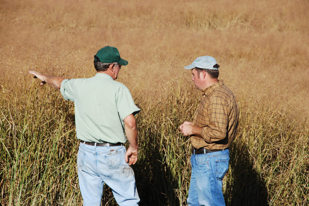 Working with Farmers in Switchgrass