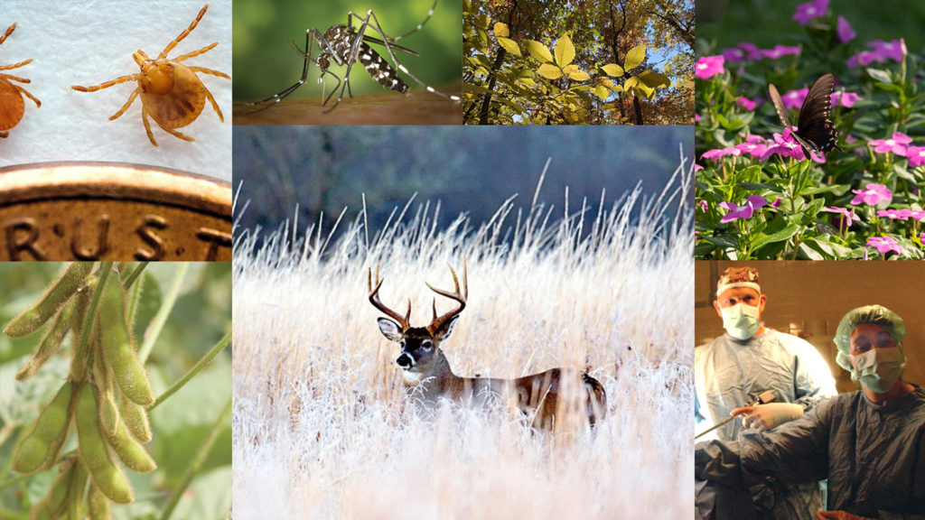 Collage of animal and plant species