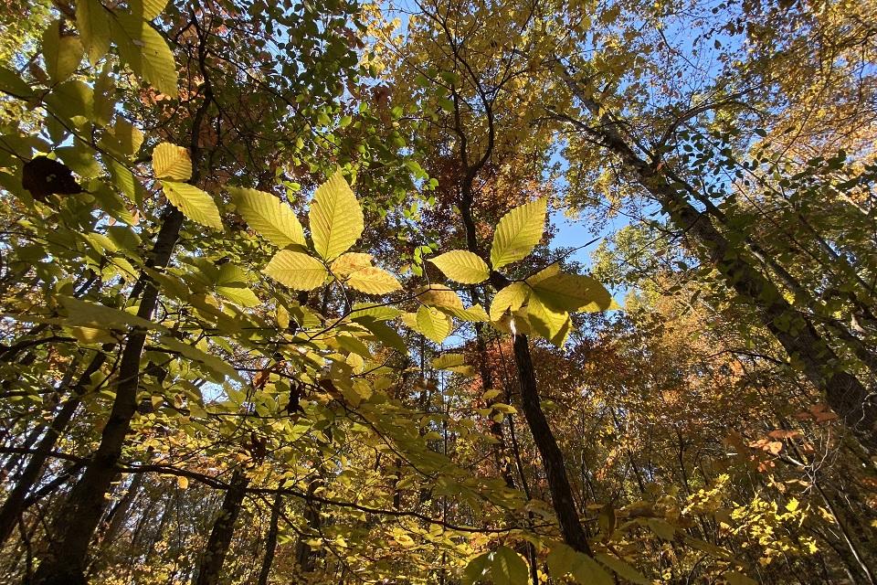Treescape