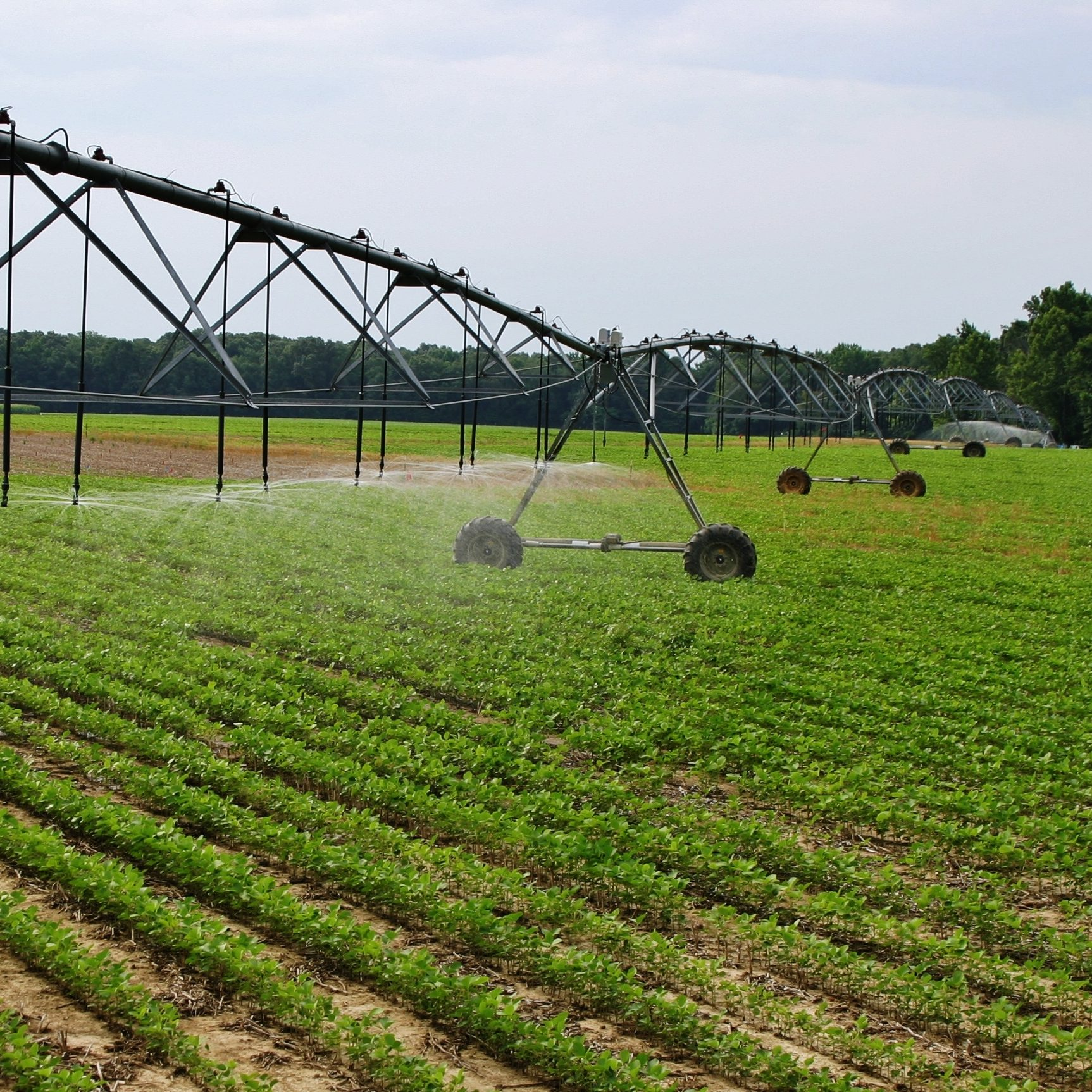 Irrigation equipment being used to spray crop